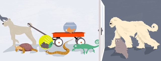 Very hairy pets pictured outside of a door, which extends inside of the home to feature eczema friendly pets including a lizard, snake, turtle, hamster, goldfish, and short haired dog