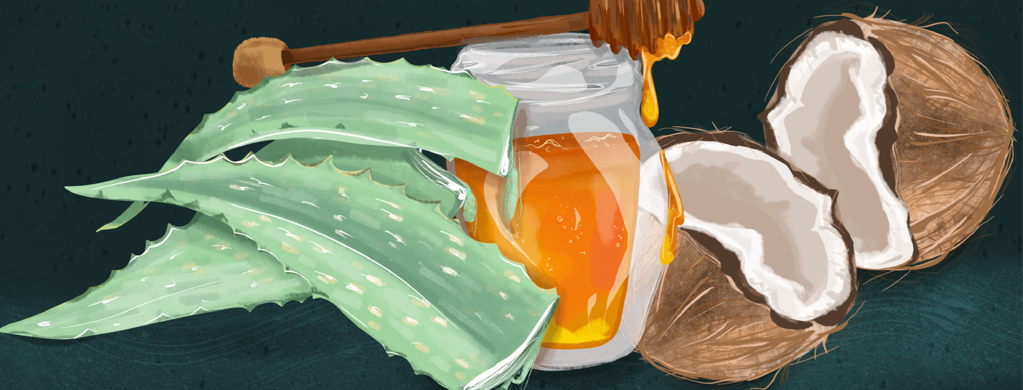 A grouping of natural soothing agents - some aloe leaves, a honey pot, and a cracked coconut.
