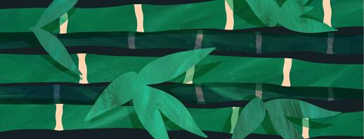 Eczema Bamboo Growth - 90 Layers Shed! image